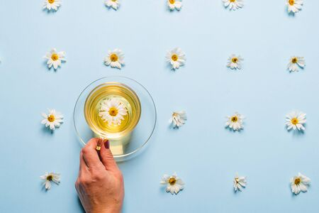 A mug of flowered chamomile tea in womans hand on a blue background with flowers spread out. Floral summer background.