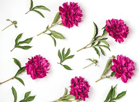 Beautiful burgundy pink peonies lie in a pattern on a white background. Horizontal frame copy space. Top view floral flat layout