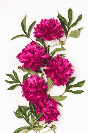 Beautiful burgundy pink peonies lie in a pattern on a white background. Vertical frame Top view floral flat layout