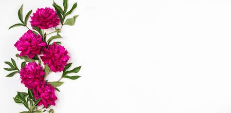 Beautiful burgundy pink peonies lie in a pattern on a white background. Horizontal frame copy space. Top view floral flat layout banner Archivio Fotografico