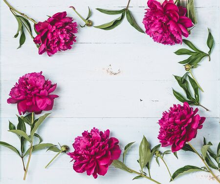 Beautiful burgundy pink peonies lie around a frame on a wooden blue background. Horizontal frame copy space. Top view floral flat layout