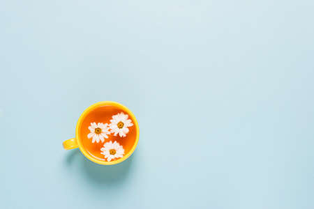 A cup of tea made of chamomile flowers blue background with spread out flowers.