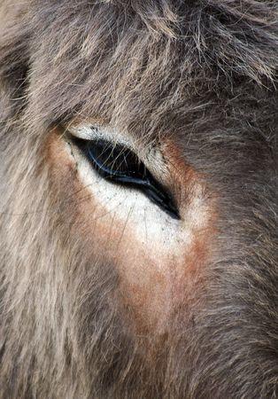 big ass: Donkey portrait Stock Photo