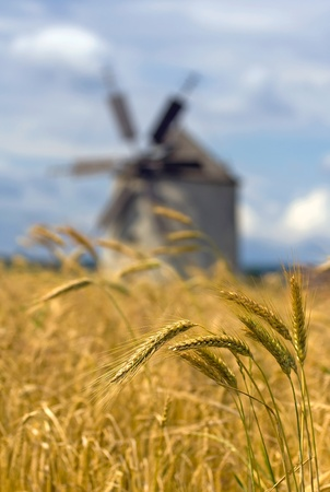 Bunch of ears of wheat with a windmill in the background - shallow depth of field photo