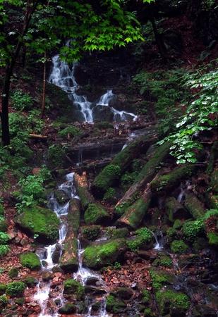 A beautiful stream in the forest 版權商用圖片