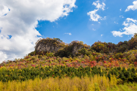 Landscape scenery view of a grassland under the blue sky 版權商用圖片