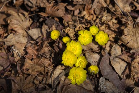 Sluit omhoog mening van wilde gele bloemen