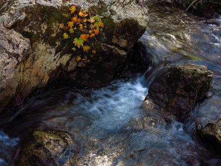 autumn stream water