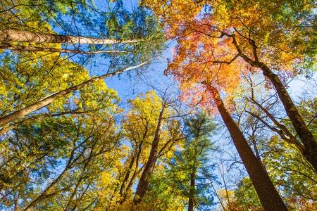 Primordial broad-leaved forest 版權商用圖片