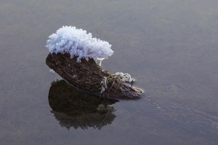 sneeuw en ijs op boomschors aan het meer Stockfoto