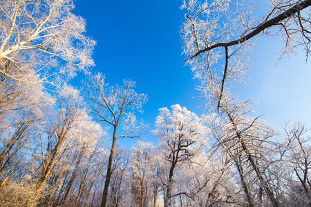 bomen op bos onder zonsondergang in de sneeuw
