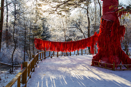 Wishing tree in the snow land 版權商用圖片