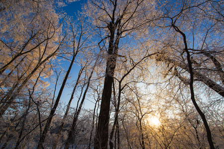 Low angle view of trees during winter under the sunlight