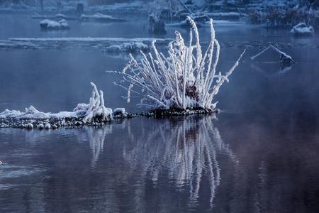 Plant bedekt met sneeuw in het water
