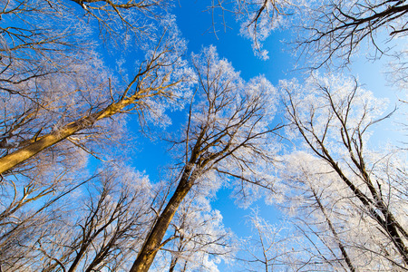 Lage hoekmening van bomen in de winter onder de blauwe hemel