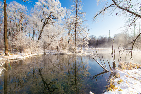 Landscape view of trees during winter under the blue sky
