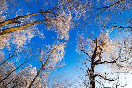 Low angle view of trees during winter under the blue sky