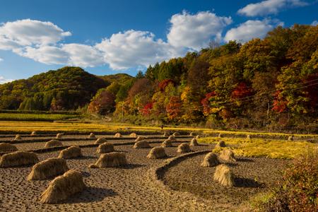 Colorful autumn scenery 版權商用圖片