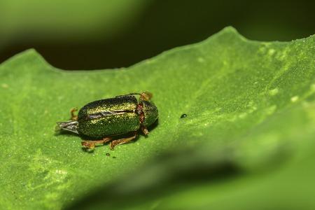 bug on leave