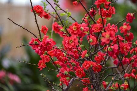 Flowers Blooming in Greenhouses in Winter