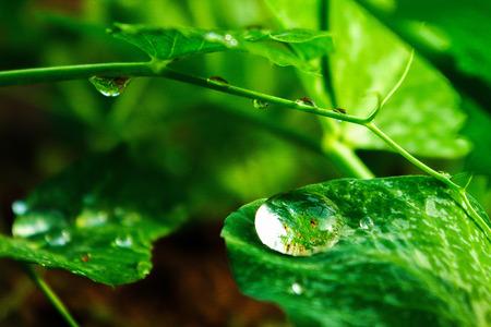 Dewdrop after rain