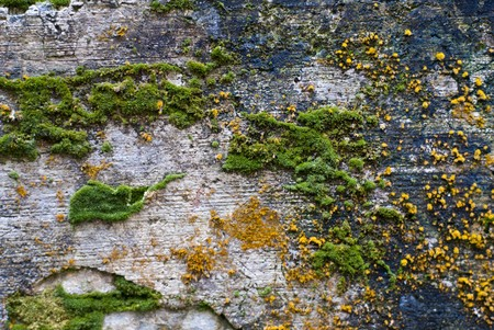 Colorful moss on the stone texture background