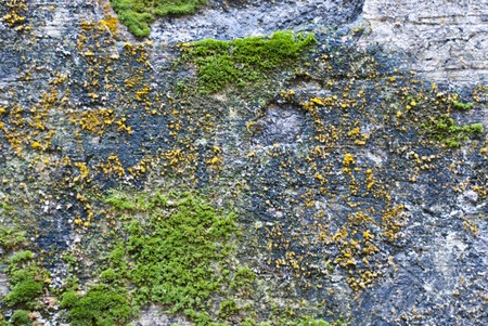 Colorful moss on the stone texture background  photo
