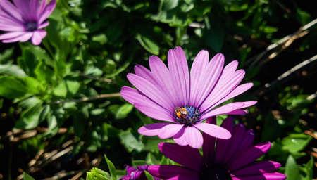 Violet flower / violet flower