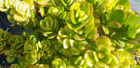 Close-up of a green plant / Close-up of a green plant