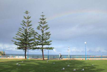 Two Alpine tree stoy on the Manly beach, Australiafeel fresh and relaxing with family