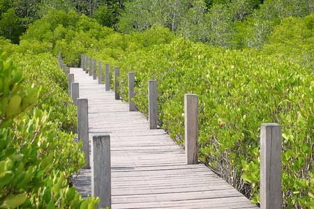 Wooden bridge at Tung Prong Thong,Golden Mangrove Field,Pra Sae, Rayong, Thailand. Stock Photo