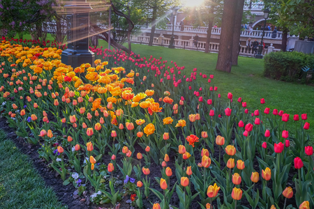 Red square and around here is a big area ,Itve Alexander garden .This here have a tulip flower for rest and relax when the weather is good.