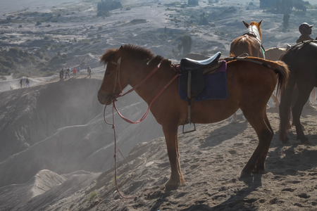 Mt. Bromo, East Java, Indonesia - JUL 2018 : The horse for tourism into the crater of Indonesias Mount Bromo with desert view very nature. It's popular for travelor.