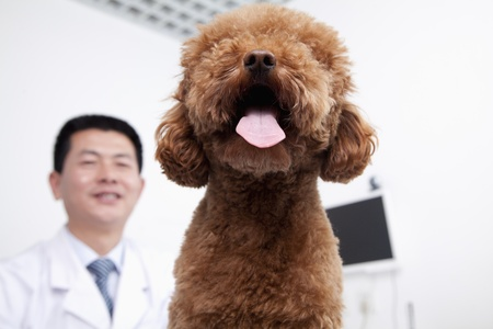 pampered pets: Dog in veterinarians office