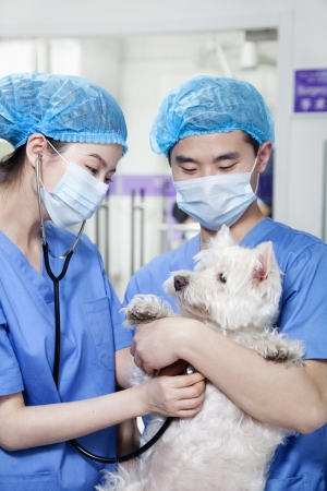 examining: Veterinarians examining dog Stock Photo