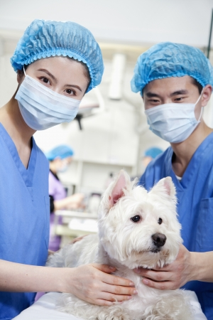 Veterinarians with dog photo