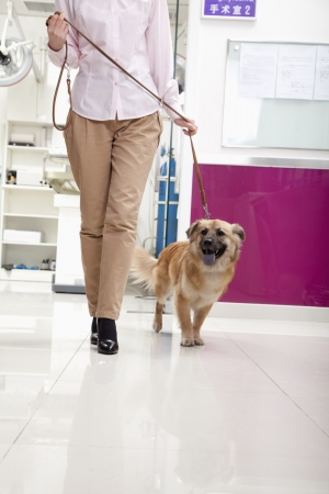 pampered pets: Woman walking with dog in veterinarians office