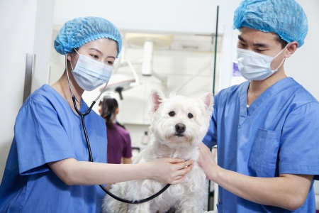 Veterinarians examining dog photo