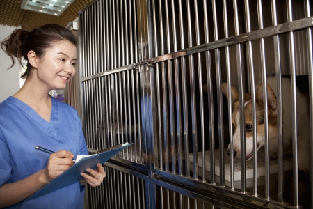 Veterinarian filling out medical chart photo