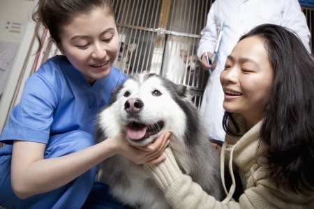 Woman with pet dog and veterinarian photo
