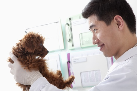 pampered pets: Veterinarian holding dog in office Stock Photo