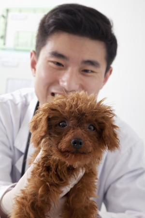 Veterinarian holding dog in office photo