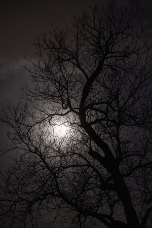 Silhouette of trees in the moonlight.  Banque d'images