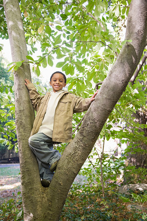 afro caribbean ethnicity: Boy in a tree Stock Photo