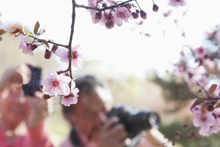 above 30: Close up of cherry blossoms on a branch with people taking photographs of them in the background, springtime, Beijing
