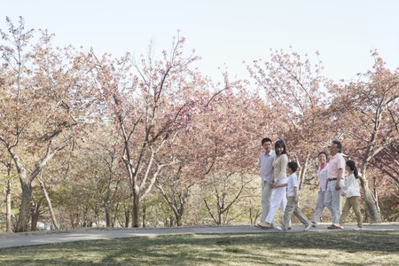 some under 18: Multi-generational family taking a walk amongst the cherry trees in a park in springtime, Beijing