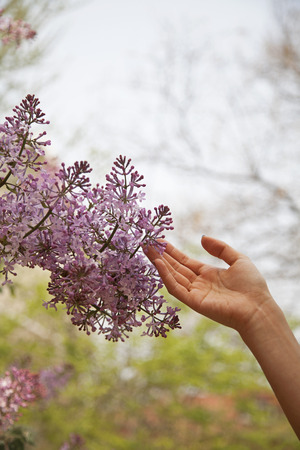 above 21: Close up of hand touching flower blossom, outside in the park in springtime