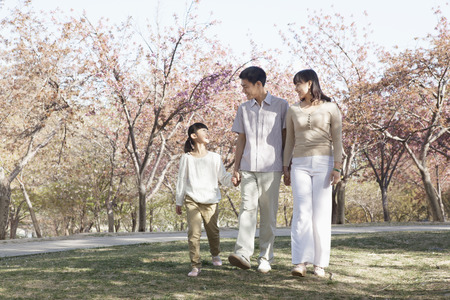 some under 18: Happy family taking a walk amongst the cherry trees in a park in springtime, Beijing