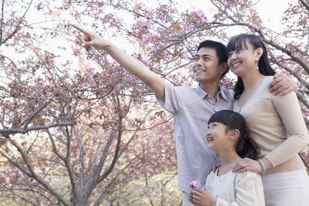 some under 18: Smiling family looking up and admiring the cherry blossoms in the park in springtime, Beijing