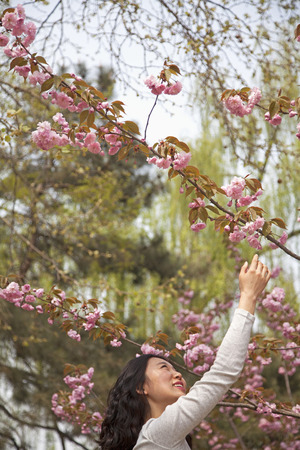 reaching up: Happy young woman reaching up to touch a flower blossom outdoors in the park in springtime Stock Photo
